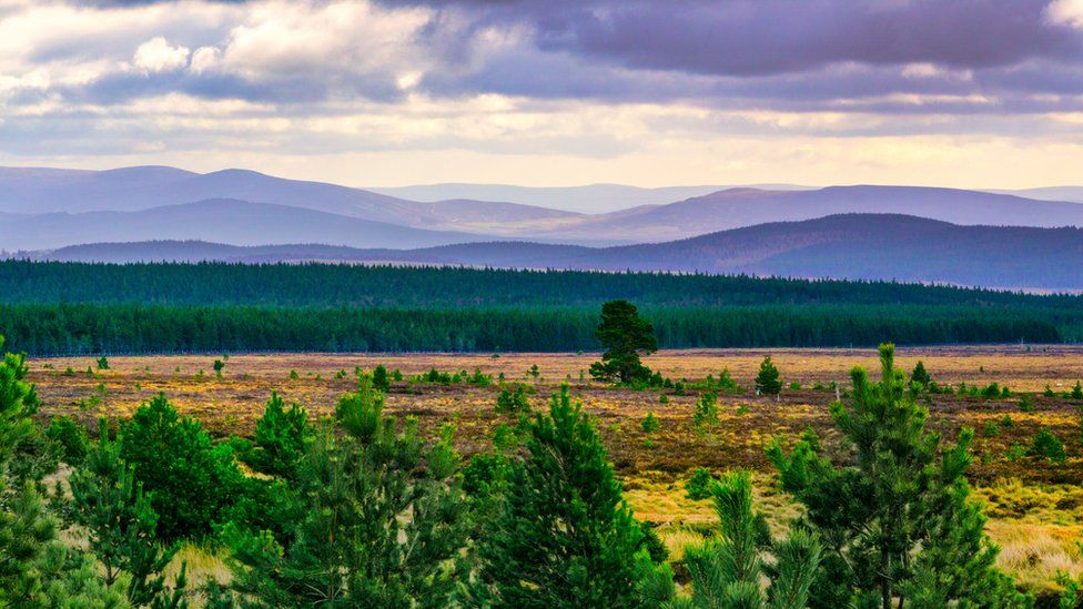 _120423182_cairngorms-gettyimages-114503