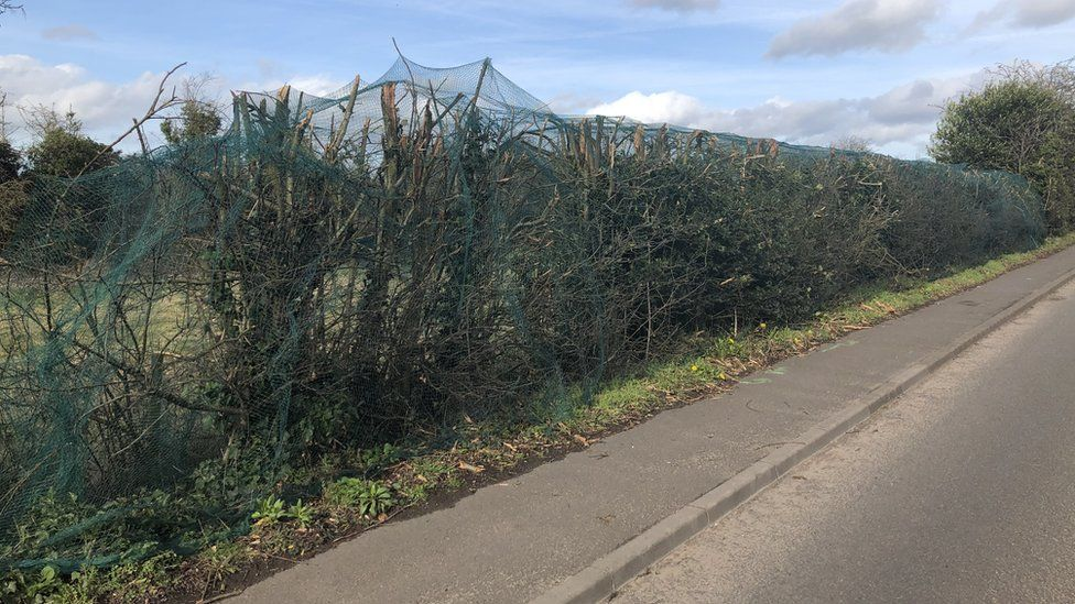 Hedges in Derby Road, in Hilton, Derbyshire