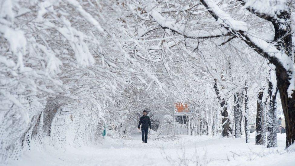 An Afghan man walks along a path under snow-laden trees in Kabul, 2017
