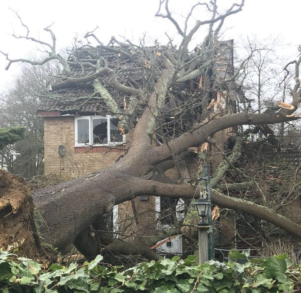 A tree surgeon and building control officer were called to the scene