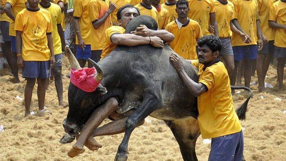 Pandian Ranjith tames a bull