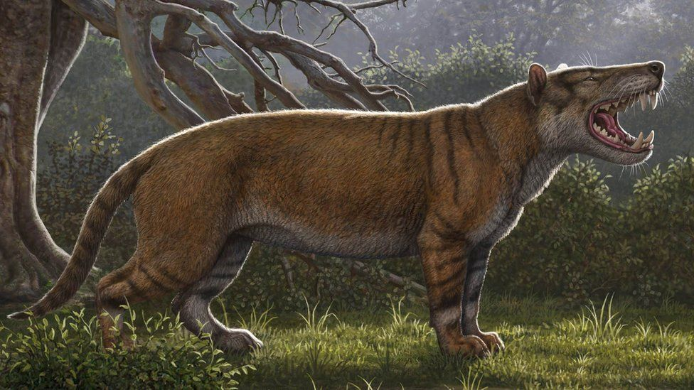 'Giant lion' fossil found in Kenya museum drawer