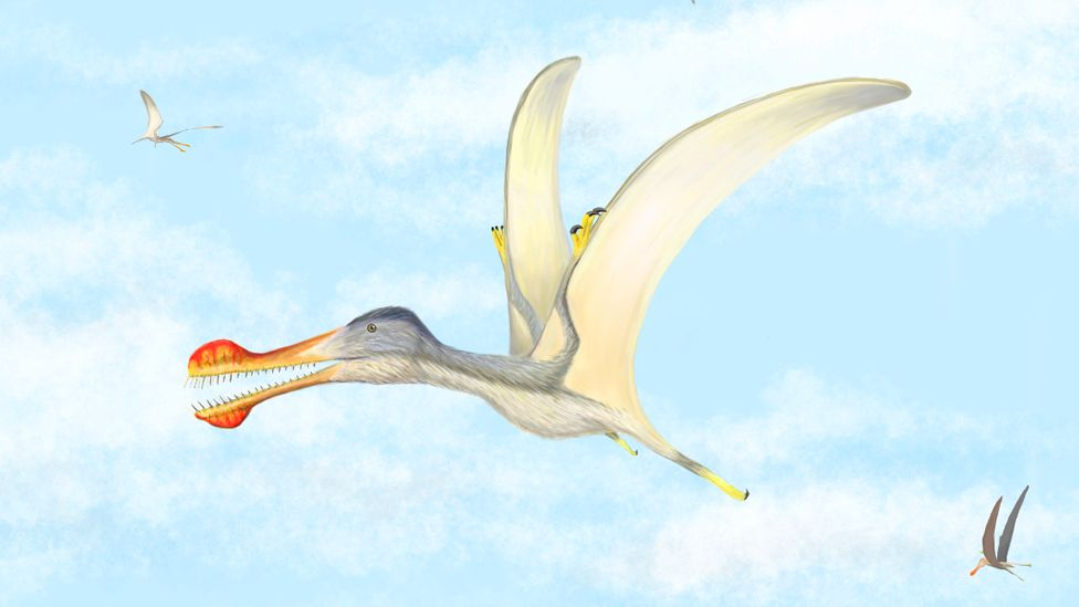 An illustration of a pterosaur released by scientists at the University of Portsmouth in the UK on Saturday 28 March 2020