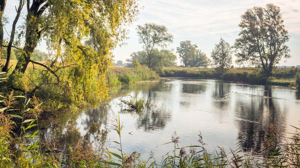 infección bacteriana del agua del estanque