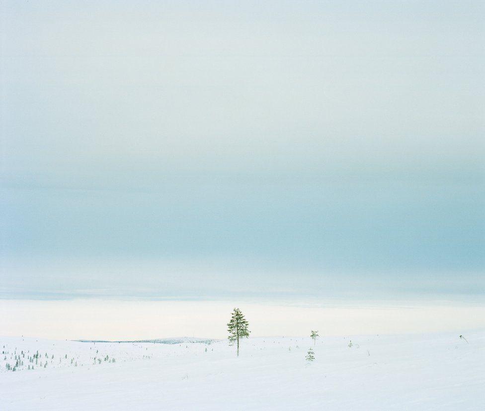 From The Green Ribbon by Hanna-Katrina Jędrosz