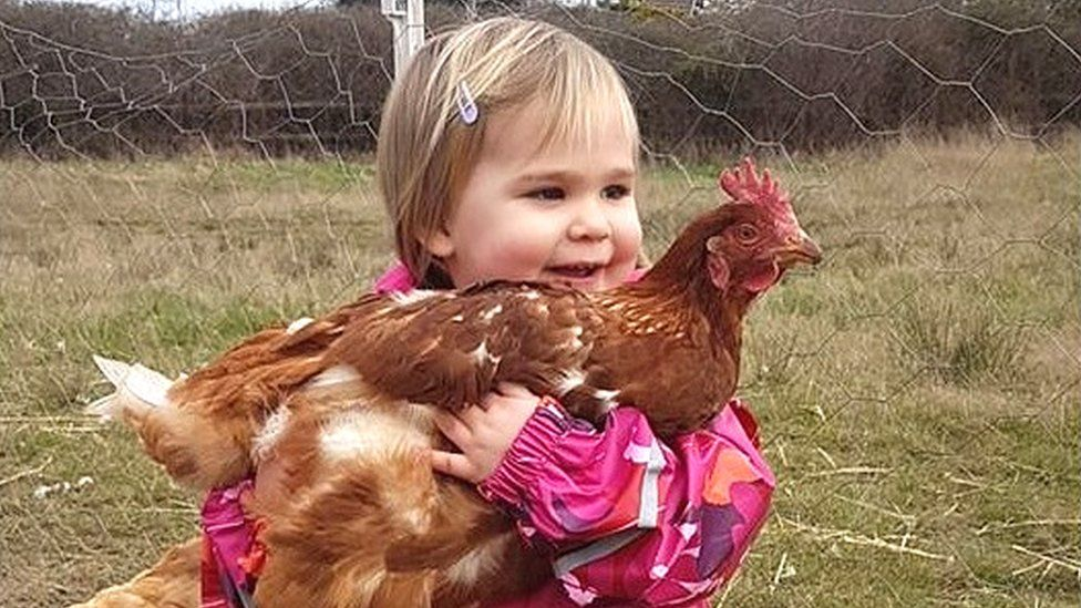 A young child holding a rehomed chicken