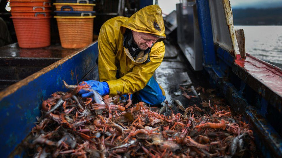 Scottish fisherman sorting crustaceans