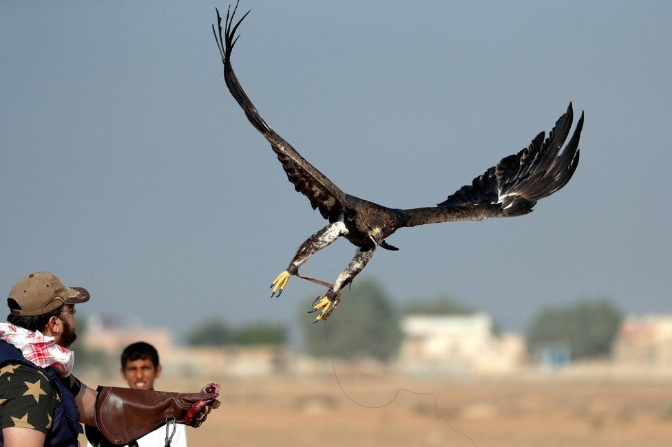Yasser al-Khawanky releases his hunting Golden eagle during a celebration by Egyptian clubs and austringers on World Falconry Day at Borg al-Arab desert in Alexandria, Egypt, November 17, 2018
