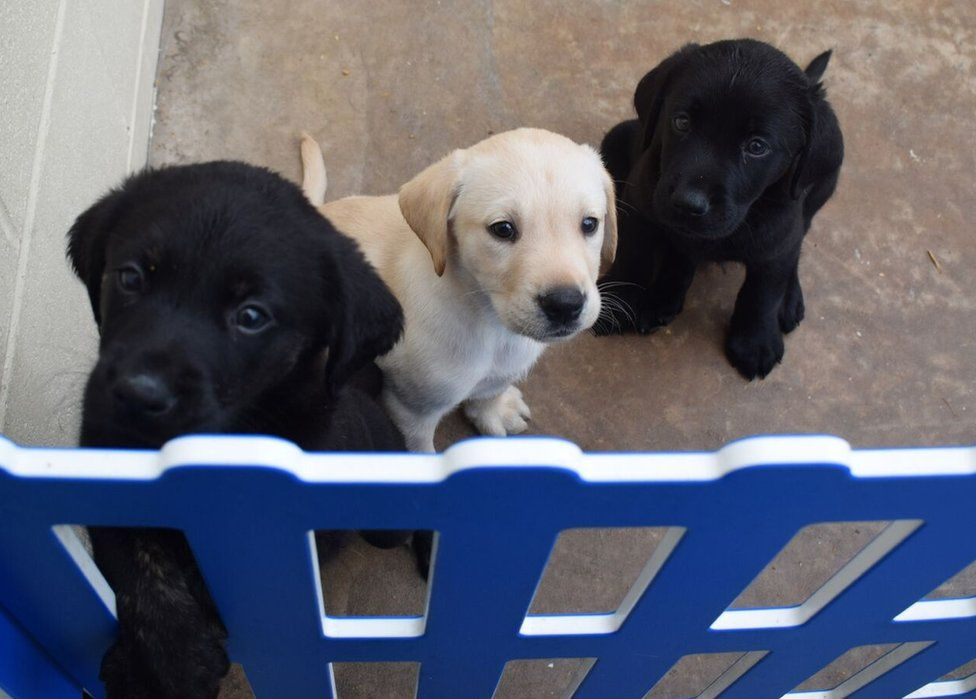 A trio of pups sitting in a line