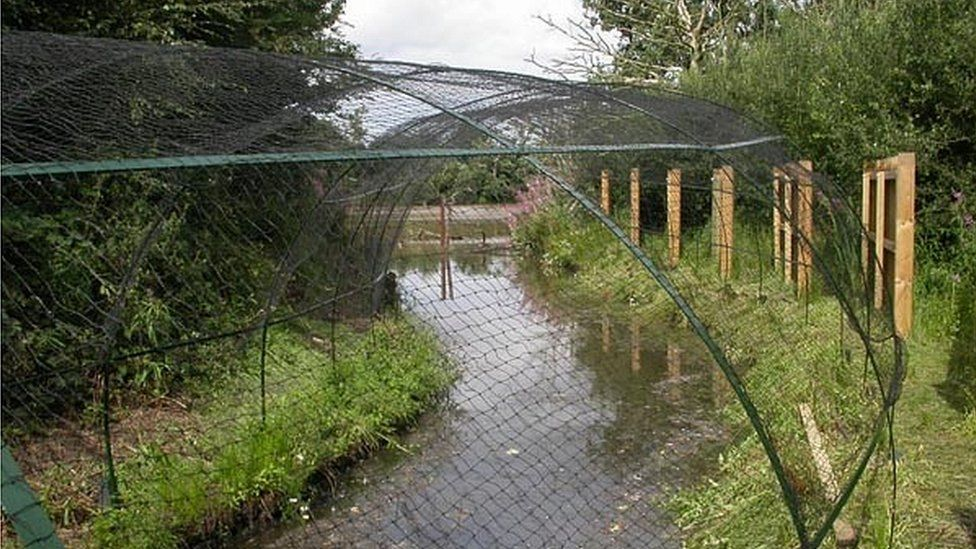 Nets over pipes where ducks would be lured
