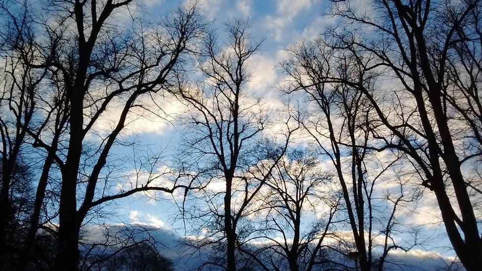 Trees silhouetted against blue sky