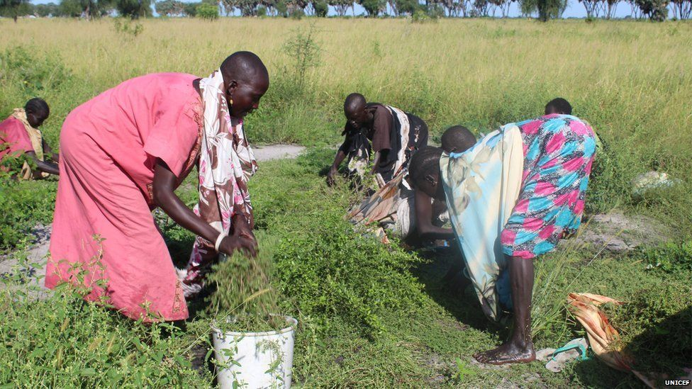 Women from Kaldak collect grass and leaves to eat