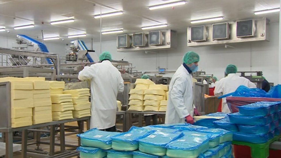 Workers at the Prima Cheese factory