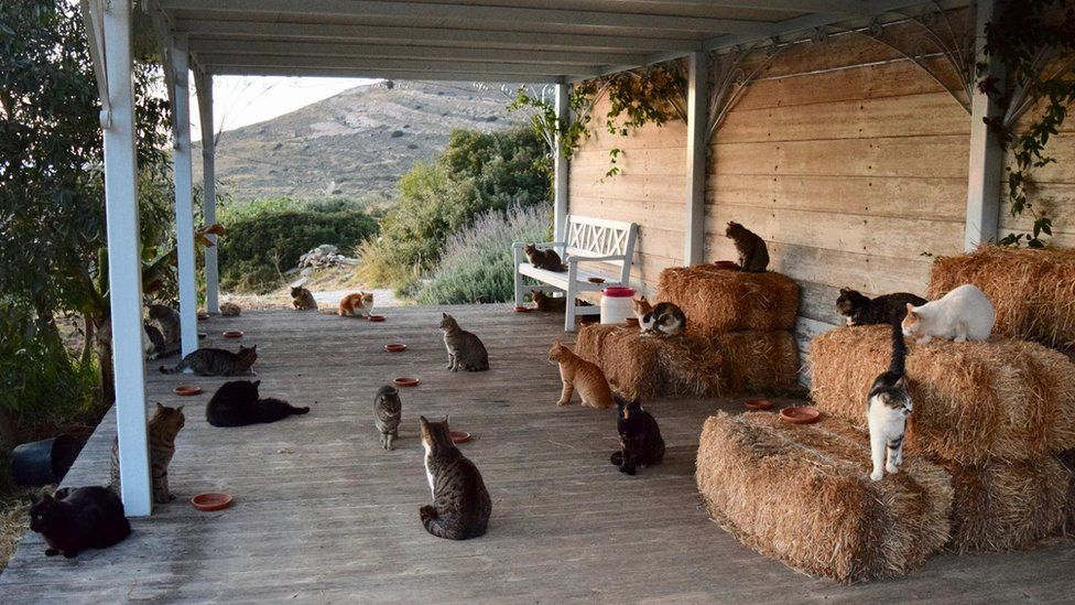 The cats at the sanctuary