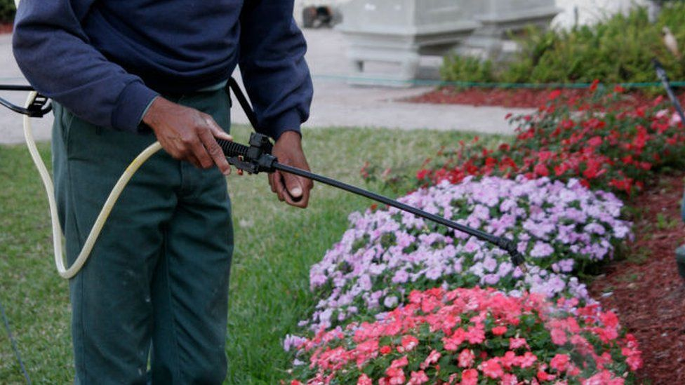A gardener sprays plants with pesticide in Florida