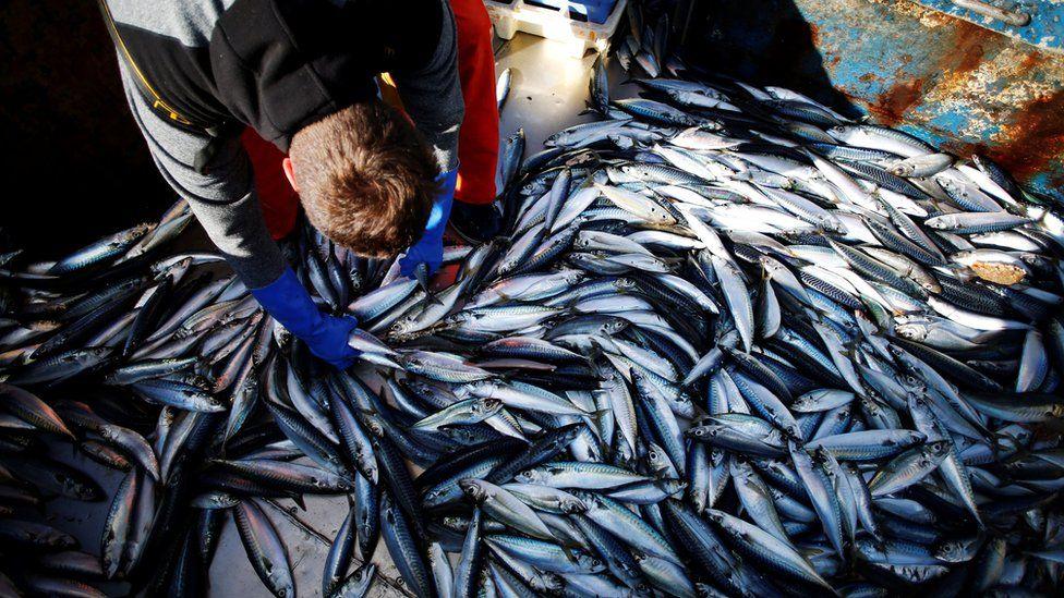 A French fisherman sorts through a catch on mackerel