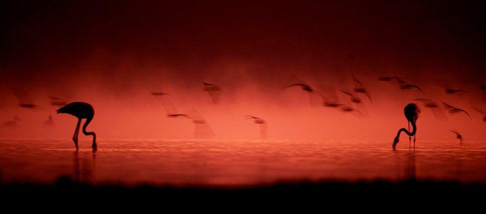 Silhouette photo of flamingos