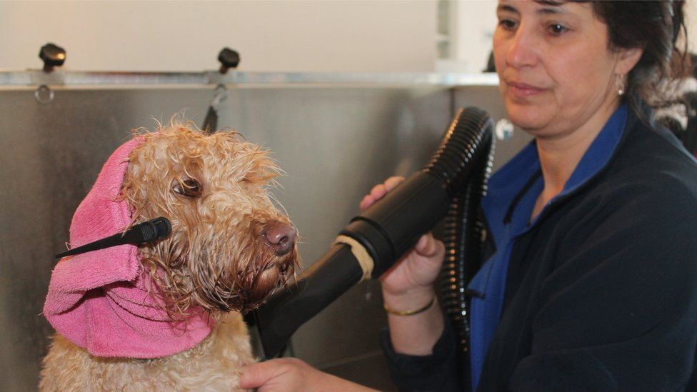 Carol Shaw grooming a dog with pink head towel