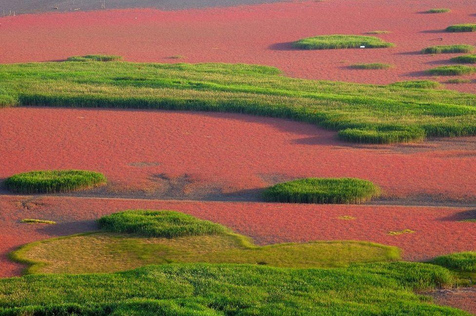 Estuarine tidal flat wetlands in South Korea