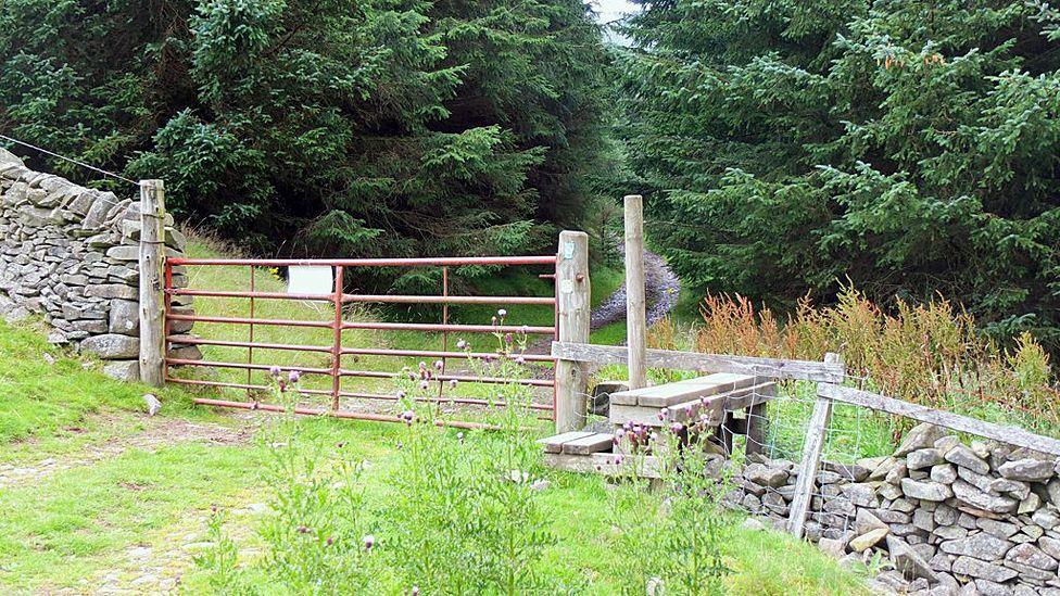 Caberston Forest