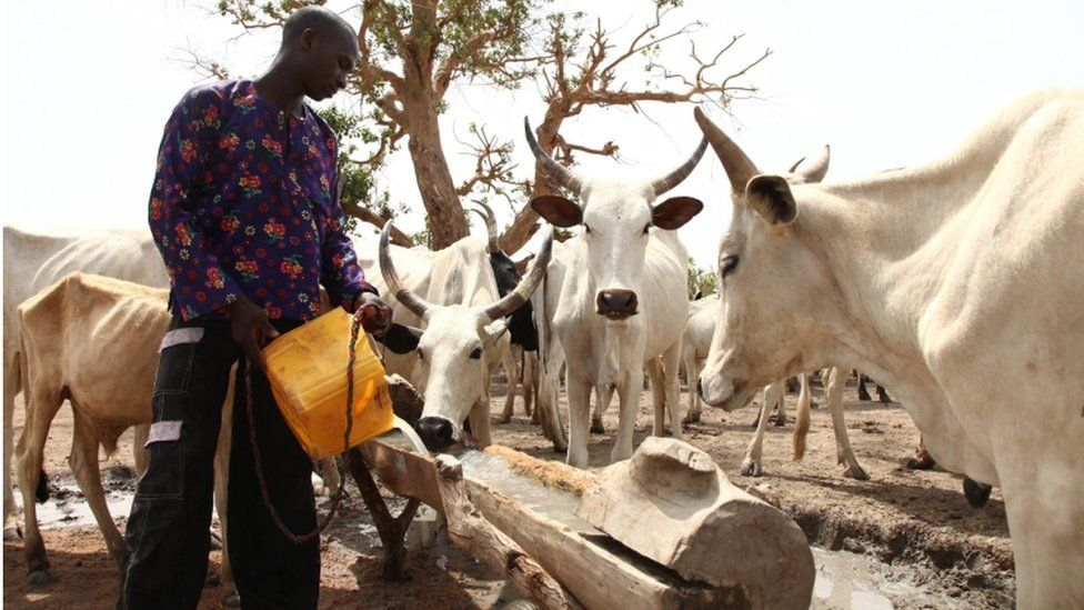 A Fulani herdsman waters his cattle on a dusty plain between Malkohi and Yola town on 7 May, 2015