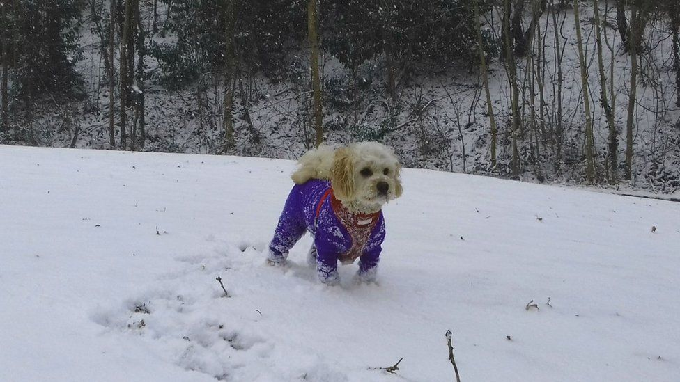 Charlie the dog from Treforest enjoys his snow day
