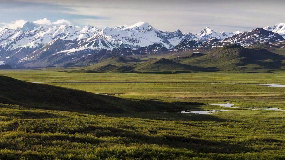 Green Arctic tundra