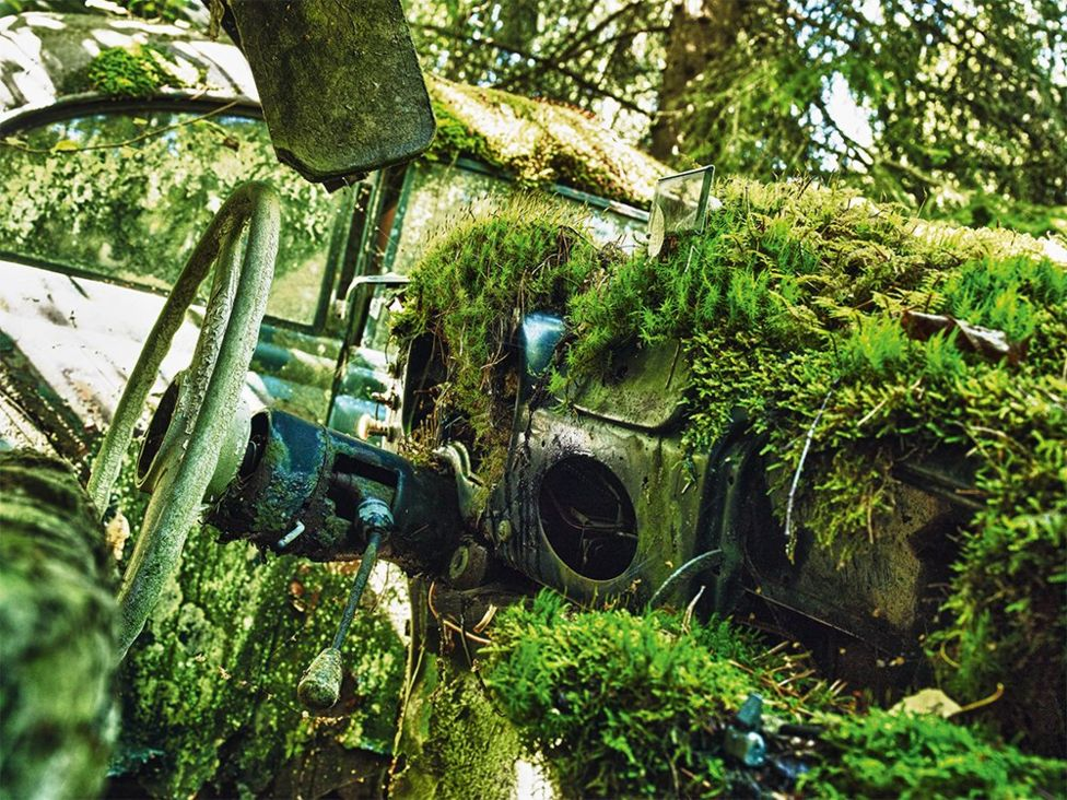 The dashboard of an abandoned car with moss and plants growing inside