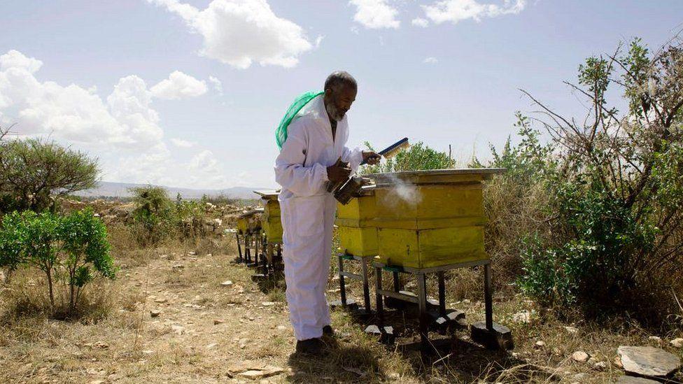 Honey farmer Alem Abreha in the Tigray region of northern Ethiopia on March 29, 2017