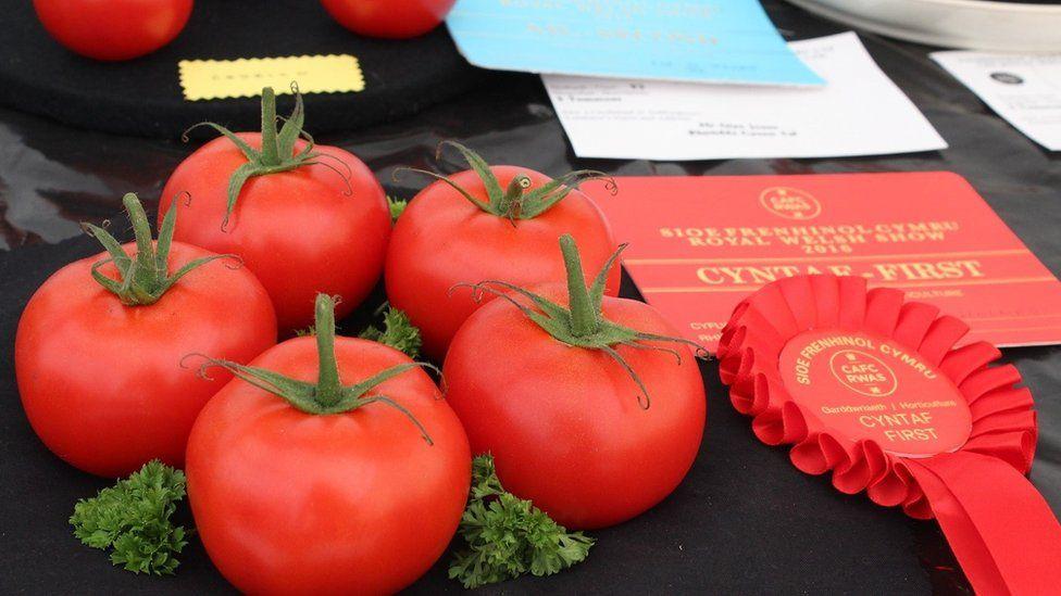 Pum tomato buddugol R A Holmes o Bowys