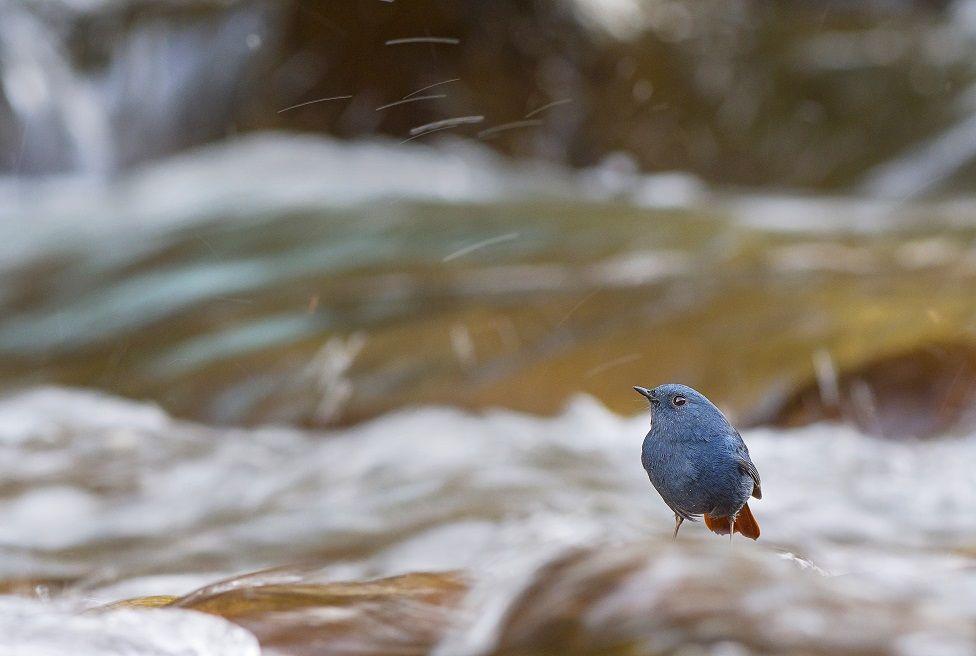 A bird next to a river