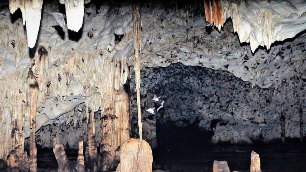 Murciélagos volando dentro de la cueva