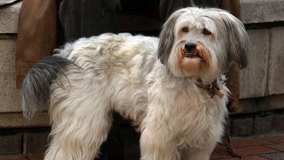 Britain's Got Talent winner Pudsey the dog