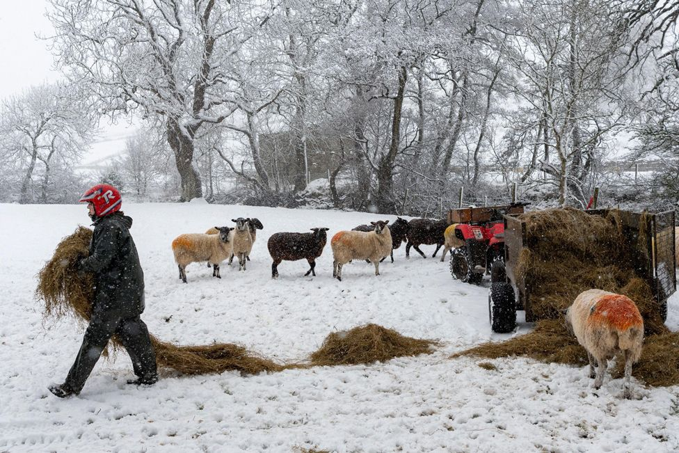 A farmer feeds their livestock near Hawes, North Yorkshire, 14 January 2021