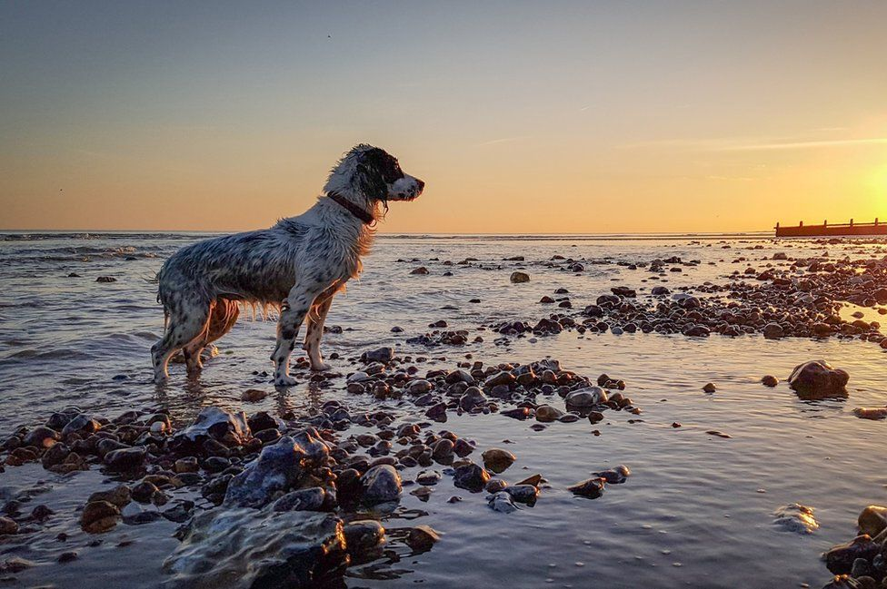 A wet dog standing in water on a beach