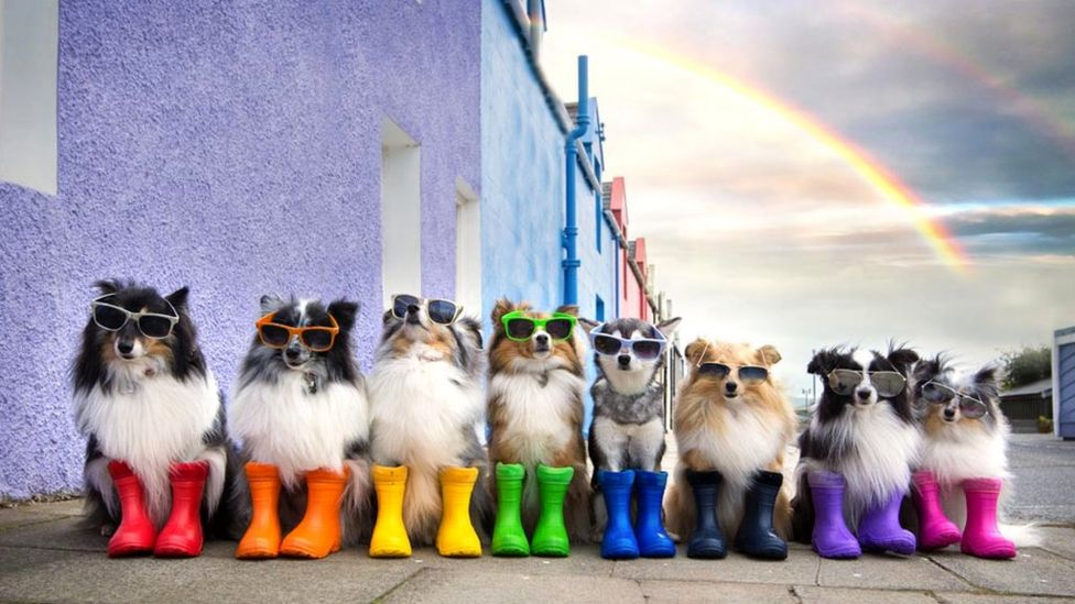 Dogs in wellies
