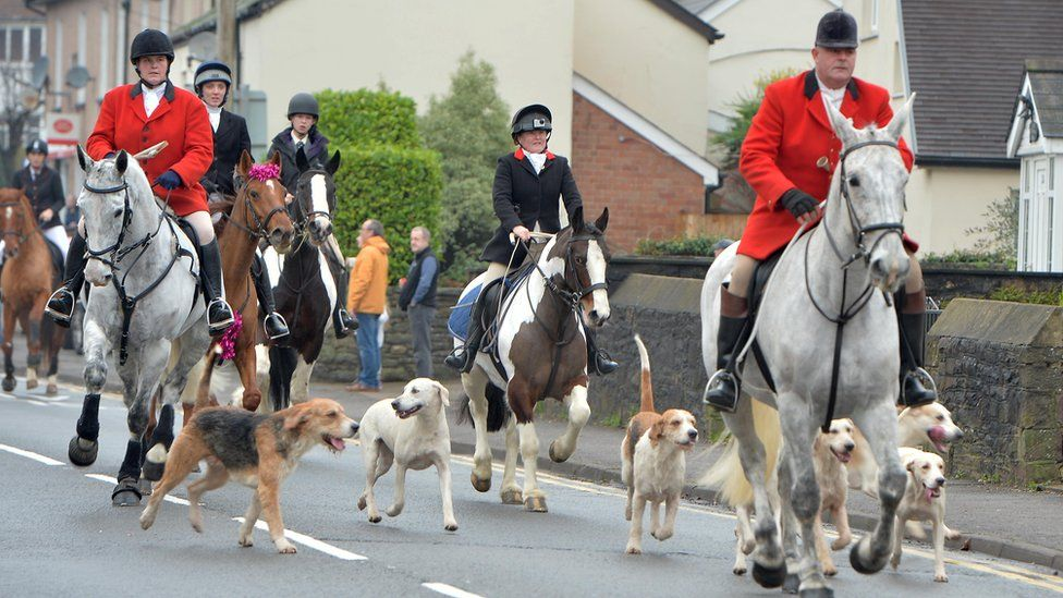 Hunt riders and hounds