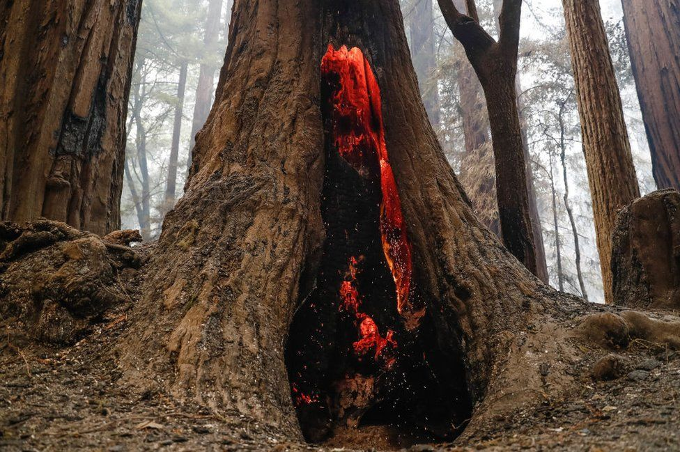Redwoods, the tallest trees in the world, have caught fire near their eponymous state park