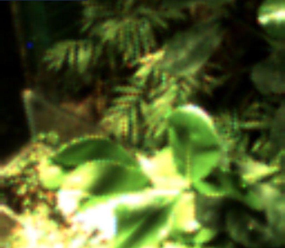 Selfie of plant