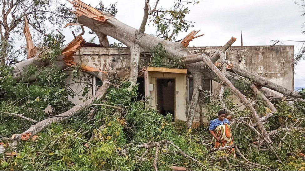 A woman in Macomia, northern Mozambique assesses the damage after a mature baobab tree slammed into her home during Cyclone Kenneth
