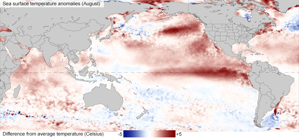Sea surface temperature anomalies (August)