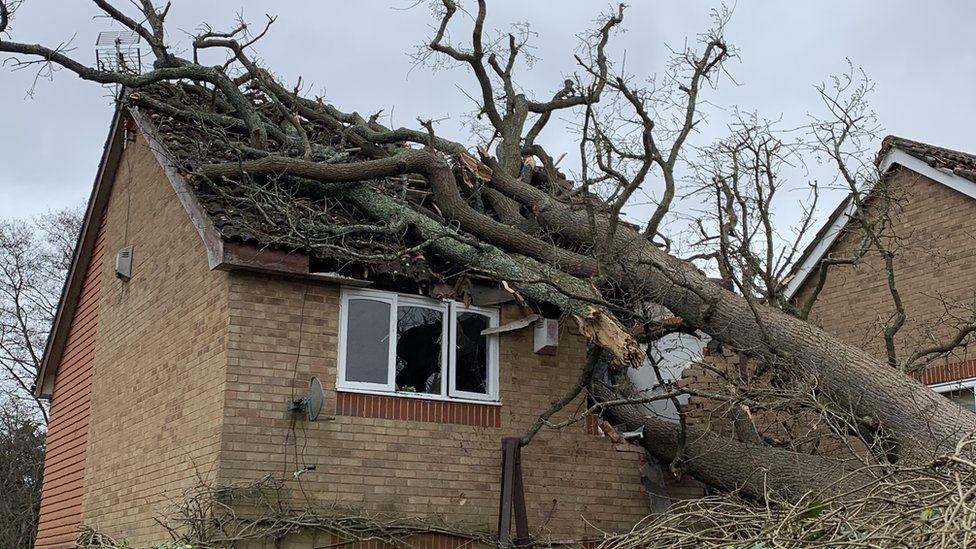 Fallen tree in Chetwood Road, near Crawley