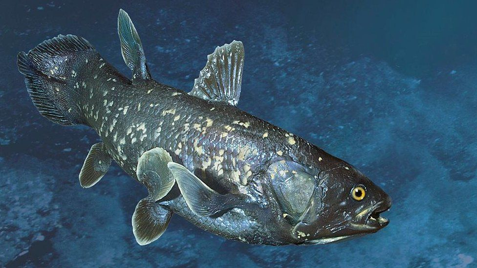 Coelacanths are found around the coastline of Indonesia and in the Indian Ocean