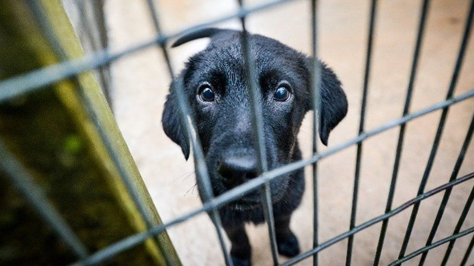 Tara, a puppy cared for by the Dogs Trust