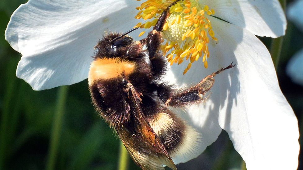 Russia alarmed by large fall in bee populations