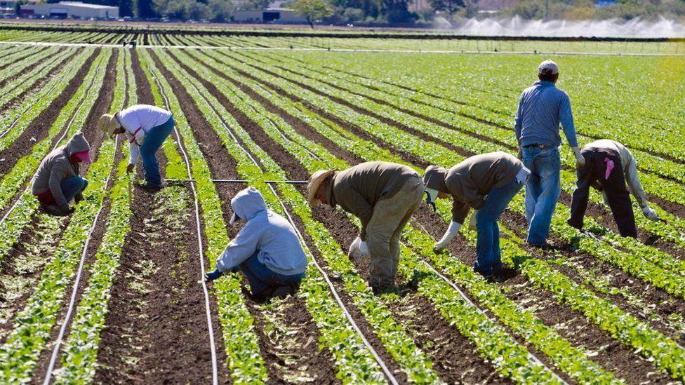people picking fruit