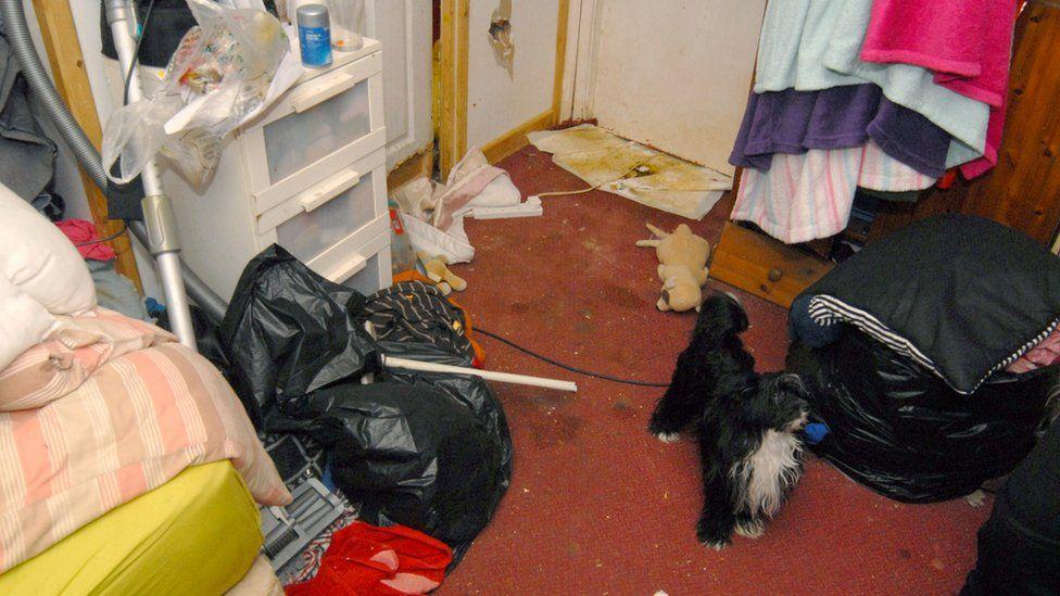 Animals were found in back room