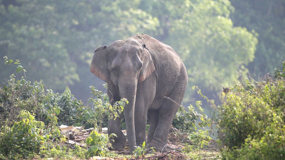 Lone elephant in the park