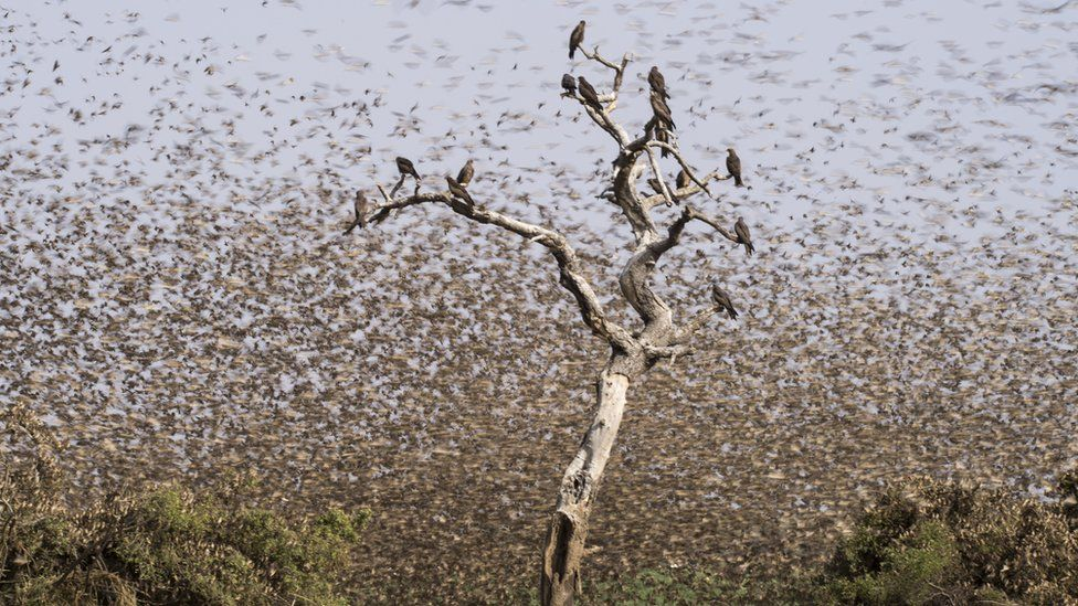 A huge flock of birds at the Zakouma National Park in Chad
