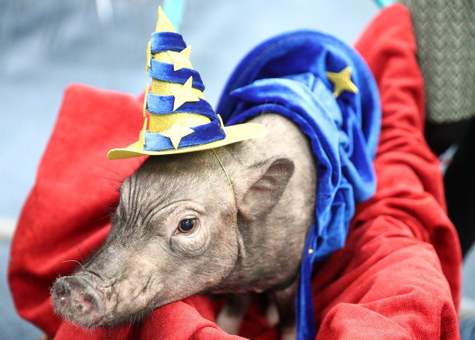 A pig in a red cloak and a wizard hat
